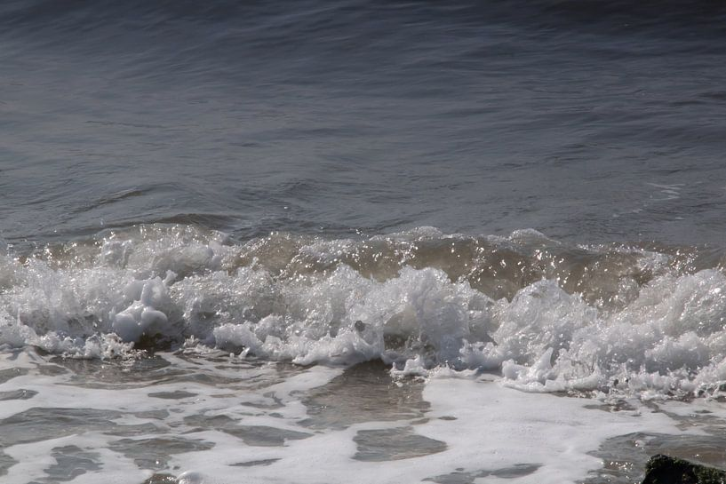 Zeeländisches Meersalzland von Kuifje-fotografie