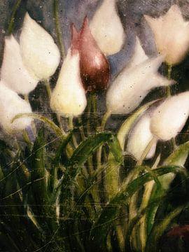 witte en rode tulpen van Christine Nöhmeier