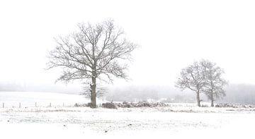 Bomen in de sneeuw van Corinne Welp