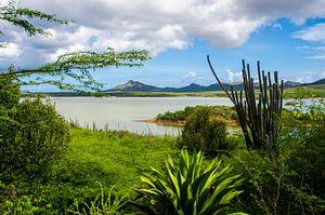 Natuur in Bonaire