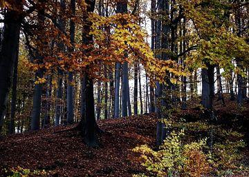 Autumn forest van Rosi Lorz