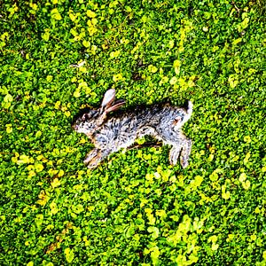 Dood konijn in groene weide van Jan Hermsen