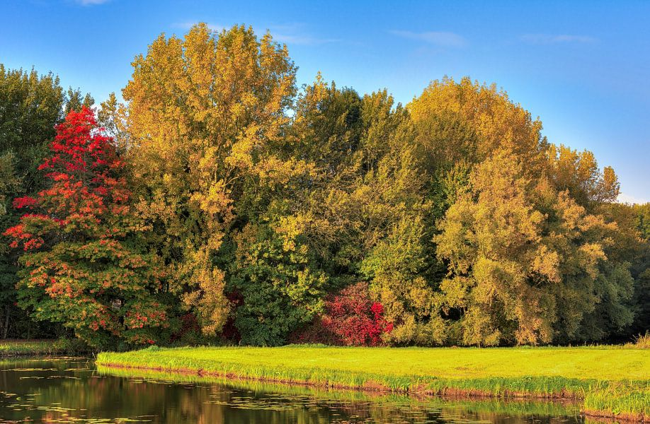 Herfst in de Biesbosch van Sigrid Klop