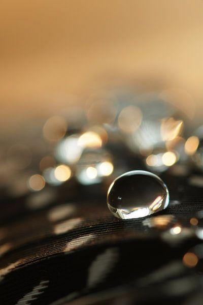 Gold drops