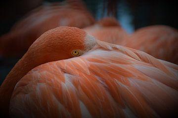 Flamingo  von Tessa Mulder