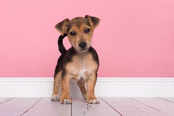 Jack-Russell-Terrier-Welpe von Elles Rijsdijk