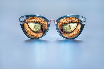 Indringend kijkende katteogen in een zonnebril van Harrie Muis