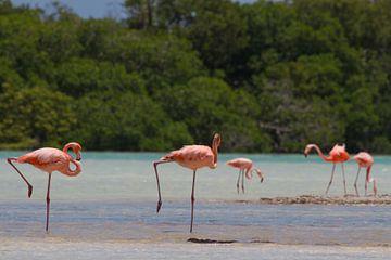 Flamingo's van Jeroen Meeuwsen