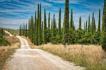 Tuscan Zypresse von eric van der eijk