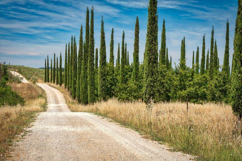 Toscaanse Cipressen van eric van der eijk