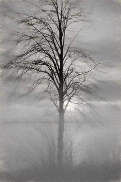 Ein Baum im Nebel und Gegenlicht von Nella van Zalk
