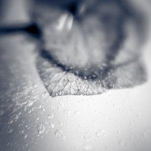 Frozen IV