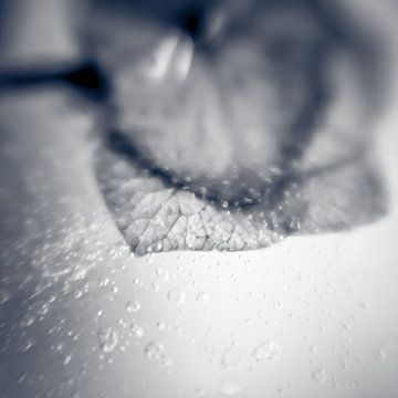 Frozen IV van Rob van der Pijll
