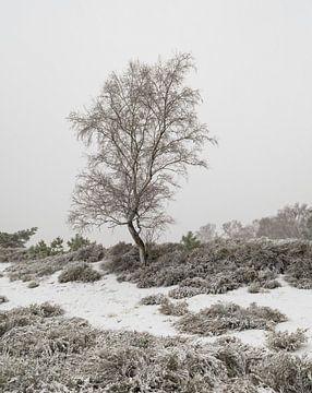 Arbre solitaire dans la neige. sur Jos Pannekoek