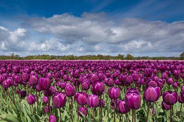 purple glow von Jan Heijmans