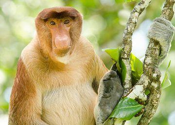 Portret van een neus aap in een boom van Elles Rijsdijk