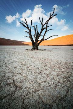 Eenzame  Acacia van Joris Pannemans - Loris Photography