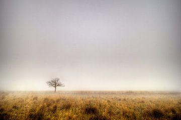 Boslandschap, Prattenburgse Bos, Veenendaal/Overberg van Jeroen Bos