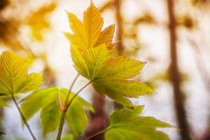 Herfstbladeren groenbruin