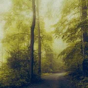 Waldweg von Dirk Wüstenhagen
