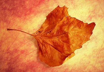 Autumn Cometh von Brian Raggatt