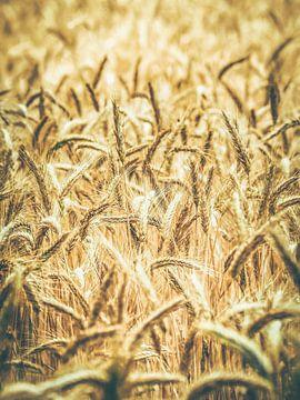 Sommer in Frankreich 1 von Miriam Meijer, en plein campagne.....