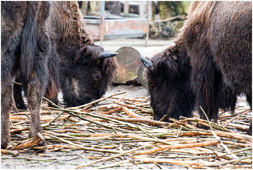 Blijdorp Zoo von Anuska Klaverdijk