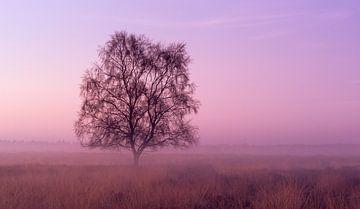 Strabrechtse Heide 187 sur Desh amer
