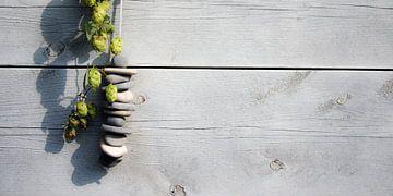 Humulus lupulus, Hop, Stenen van Sense Photography