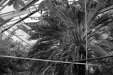 Botanisch 6 van Miriam Duda