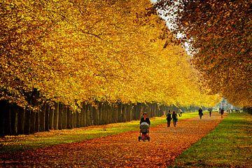 Herbst im Georgengarten in Hannover-Herrenhausen. von Dieter Ludorf