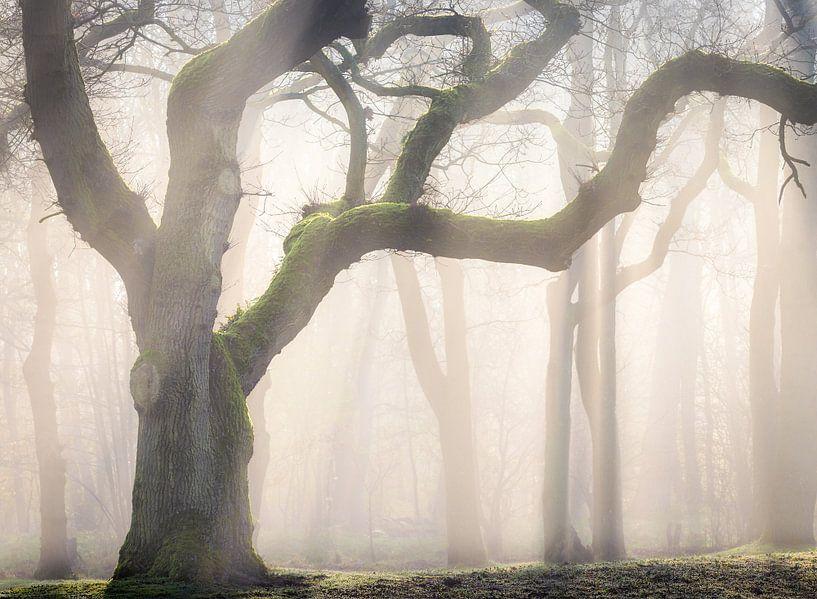 Moss creeper van Jos Duivenvoorden
