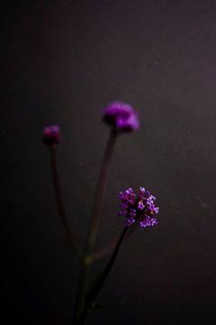 Dunkles Stilleben in Grau mit einer violetten Blüte von What I C