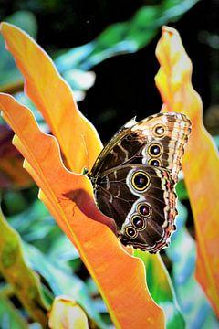 Vlinder van Monique van Falier
