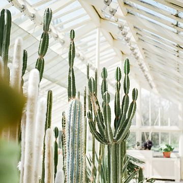 Cactussen / Cacti in de Botanische tuinen van Dublin, Ierland van Raisa Zwart