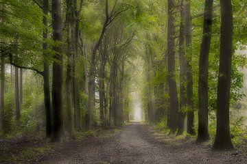 Die grüne Allee in Lochem von Jos Erkamp