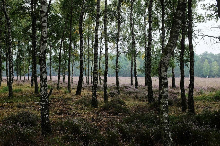 Zilvensche Heide
