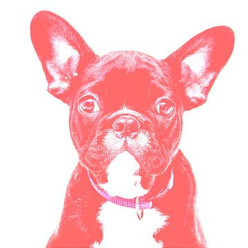 leuke franse bulldog grappige hondenhumor van Felix Brönnimann