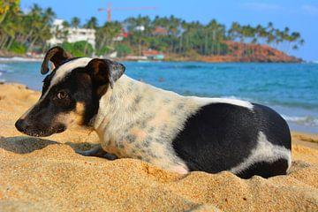 Hond op zandstrand met palmbomen bij Mirissa Sri Lanka van My Footprints