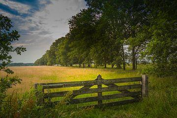Zaun im Dwingelveld von Freddy Hoevers