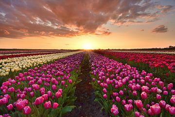 Tulpenveld bij zonsondergang Middenbeemster van John Leeninga