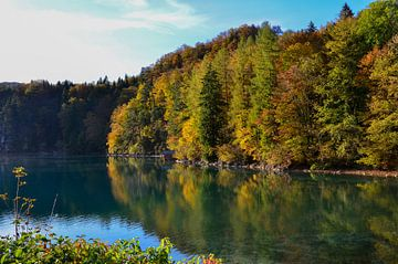 Herfstkleurige bosoever met helder blauwgroen water waarin het bos weerspiegeld wordt van LuCreator