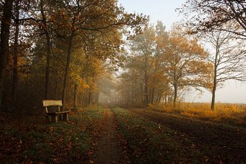 Wooden bench in an automn forest von Luis Boullosa