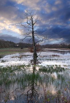 Overstroming van Ron Van der Wal