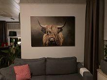 Klantfoto: Schotse Hooglander van Diana van Tankeren, op canvas