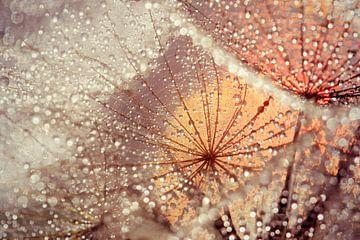 magic drops....