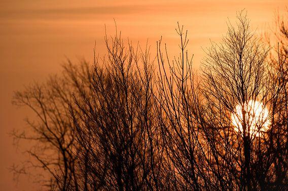 Gros plan, orange, soleil, coucher, derriere, nue, arbres