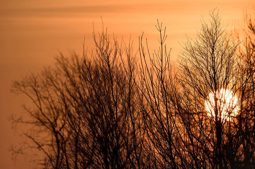 Gros plan, orange, soleil, coucher, derriere, nue, arbres sur Gea Gaetani d'Aragona
