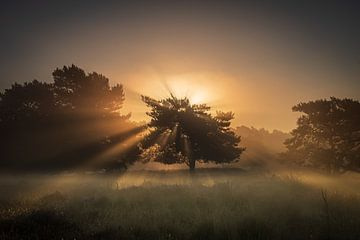 Sonnenstrahlen von Adri Klaassen