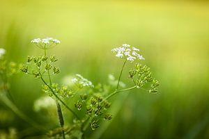Witte bloemen tegen groene achtergrond van